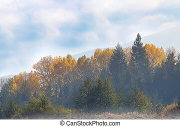 Vibrant autumn panorama background with colorful green and yellow trees