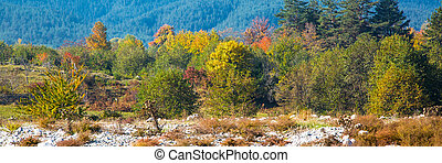 Vibrant autumn panorama background with colorful green, red and yellow trees