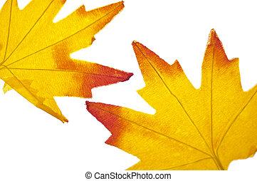 vibrant, blad, achtergrond, herfst