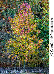 vibrant, couleurs, arbre, automne