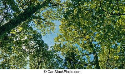vibrant, ensoleillé, arbre, au-dessus, baldaquin, jour