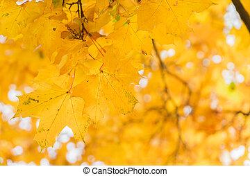 Vibrant fall foliage