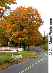 Vibrant Fall Foliage Maple Tree