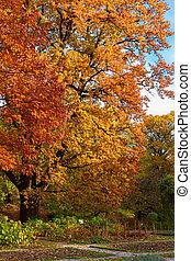 Vibrant fall yellow and orange oak tree foliage