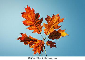 Vibrant fall leaves