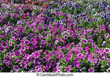 Vibrant flowers in the city of Dubai
