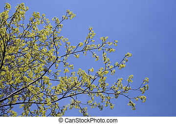 Vibrant green color of a spring tree