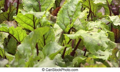 Vibrant green leafy vegetables
