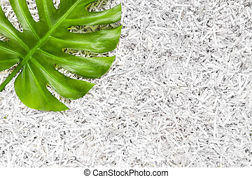 Vibrant green Monstera leaf in a heap of shredded paper