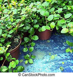 Vibrant green plants in pots