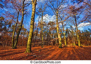Vibrant image of autumn forest at sunset - Vibrant image of...