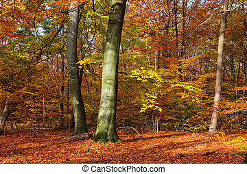 Vibrant image of autumn forest