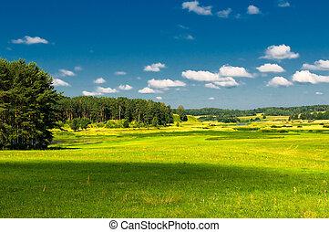 rural landscape - vibrant image of rural landscape