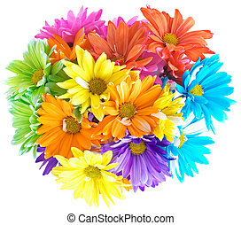vibrant, multicolore, pâquerette, bouquet