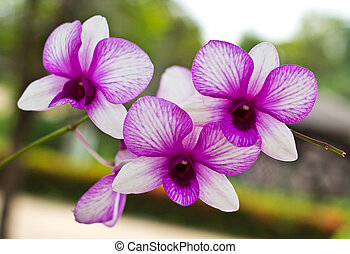 Vibrant purple tropical orchid