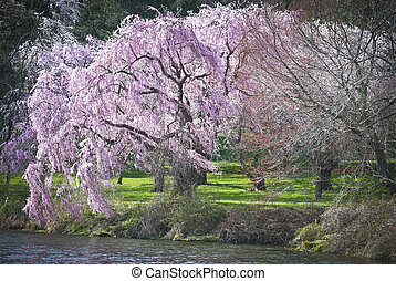 Vibrant Spring colors along the lake in Holmdel Park in...