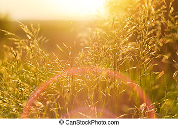 Vibrant sunset in a field of wild grass. Retro aged photo