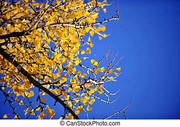 Yellow Autumn Leaves Against Blue
