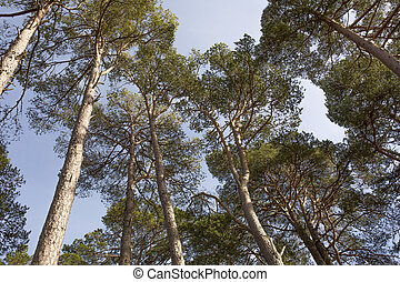 vibrante, árboles