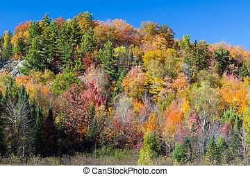 vibrante, autunno, pendio