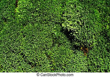 vibrante, fogliame verde, fondo
