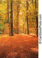 vibrante, imagen, bosque de otoño, otoño, paisaje