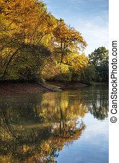 vibrante, lago, Outono, impressionante, floresta, paisagem