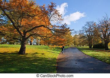 vibrante, parque, Outono, impressionante, através, caminho, paisagem