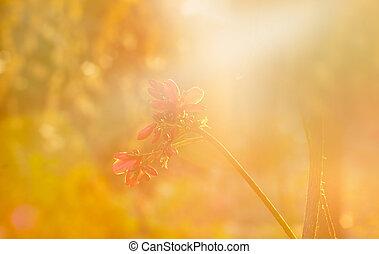 vibrante, sof, foco, en, flor, y, dry-dried, plantas, en,...