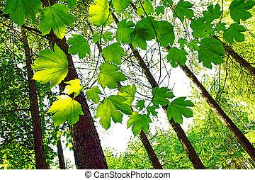 vibrante, verde, primavera, hojas, en, el, bosque