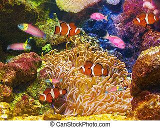 vibrante, vida, aquário, coloridos