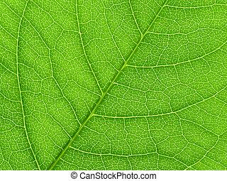 vibrerande, grön leaf, makro, tillsluta, naturlig, bakgrund.