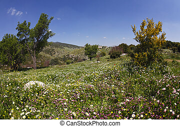 Vicinities of mountain Meron in spring day - Vicinities of...