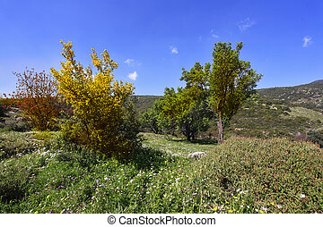 Vicinities of mountain Meron in clear spring day