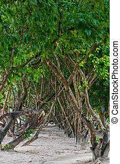 vicolo, di, tropicale, albero, su, uno, spiaggia sabbiosa, in, tailandia