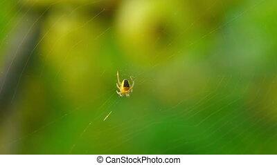 victim., attente, sien, araignés, jaune