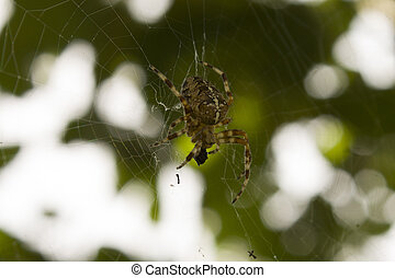 victim., mange, sien, araignés