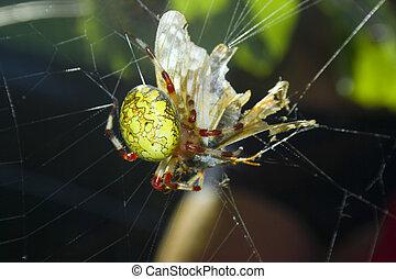 victim., manger, araignés