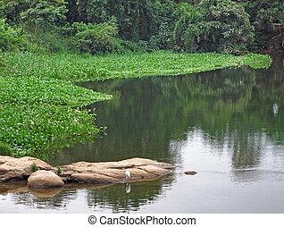 Victoria Nile waterside scenery - overgrown waterside...