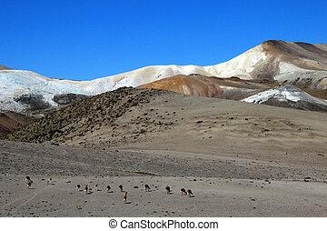 vicunas, montanhas, lua, vale, andino