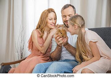 vidám család, noha, üregi nyúl