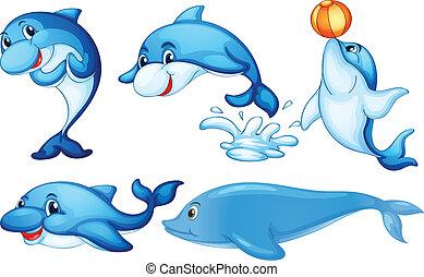 vidám, delfinek