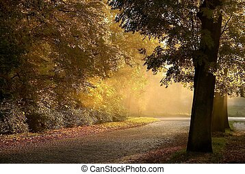 vidéki út, alatt, ősz, táj