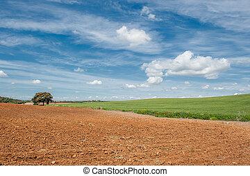 vidéki parkosít