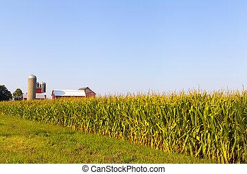 vidéki táj, amerikai