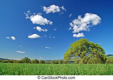 vidéki, vidéki táj