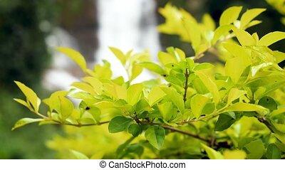 vidéo, beau, jungle, grwoing, buissons, forêt, usines, 4k, ...