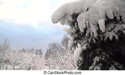 vidéo, park., hd, hiver arbre, sapin, noël, mouvement, snowly