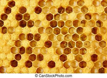vida, abejas, reproducción
