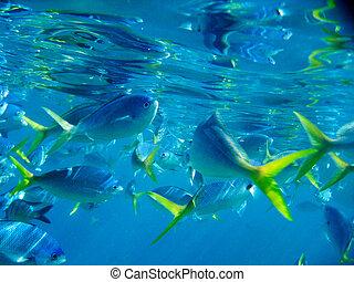 vida, barreira, grande, recife, sob, marinho